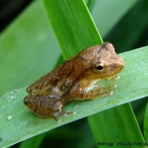 Nirvana and Spring Peepers