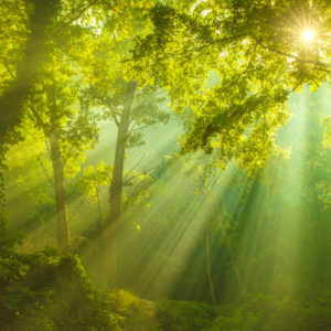 trees bathed in sunlight