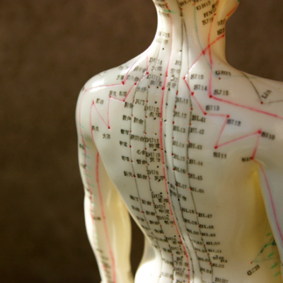 Chinese Traditional Medicine acupuncture model