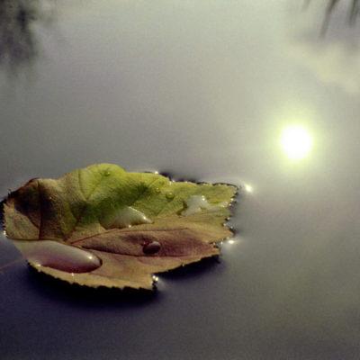 Leaf floating on water illustrates meditation practices