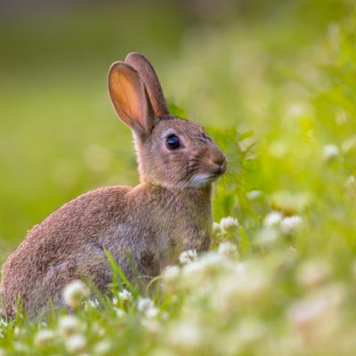 bunny in grass spiritual meaning of easter