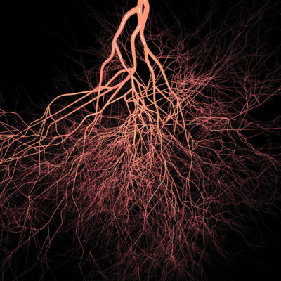 Abstract red roots