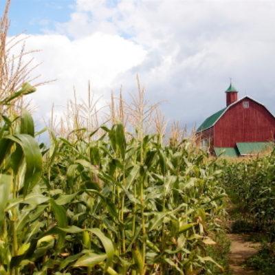 A Kid Shucking Corn: Meditations on Being Present