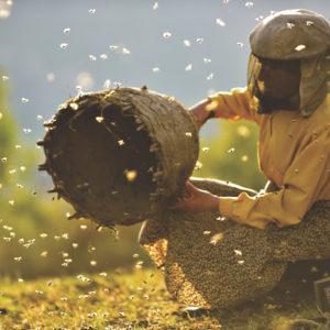 A still from the movie Honeyland