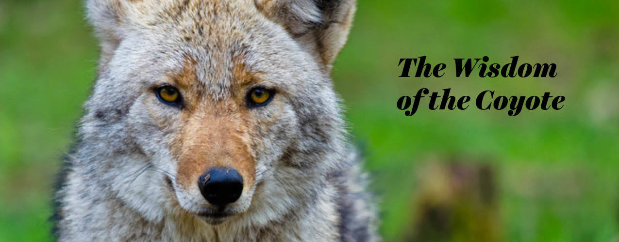 The Wisdom of the Coyote