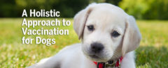 A Holistic Approach to Vaccination for Dogs
