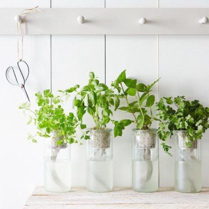 Eco Herbal Garden