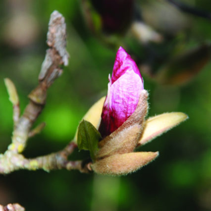 Pink Seed Anat Vaughan Lee