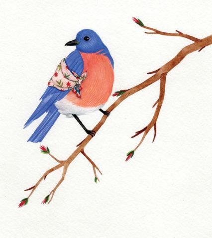 Bluebird Credit Caitlin Mc Donagh