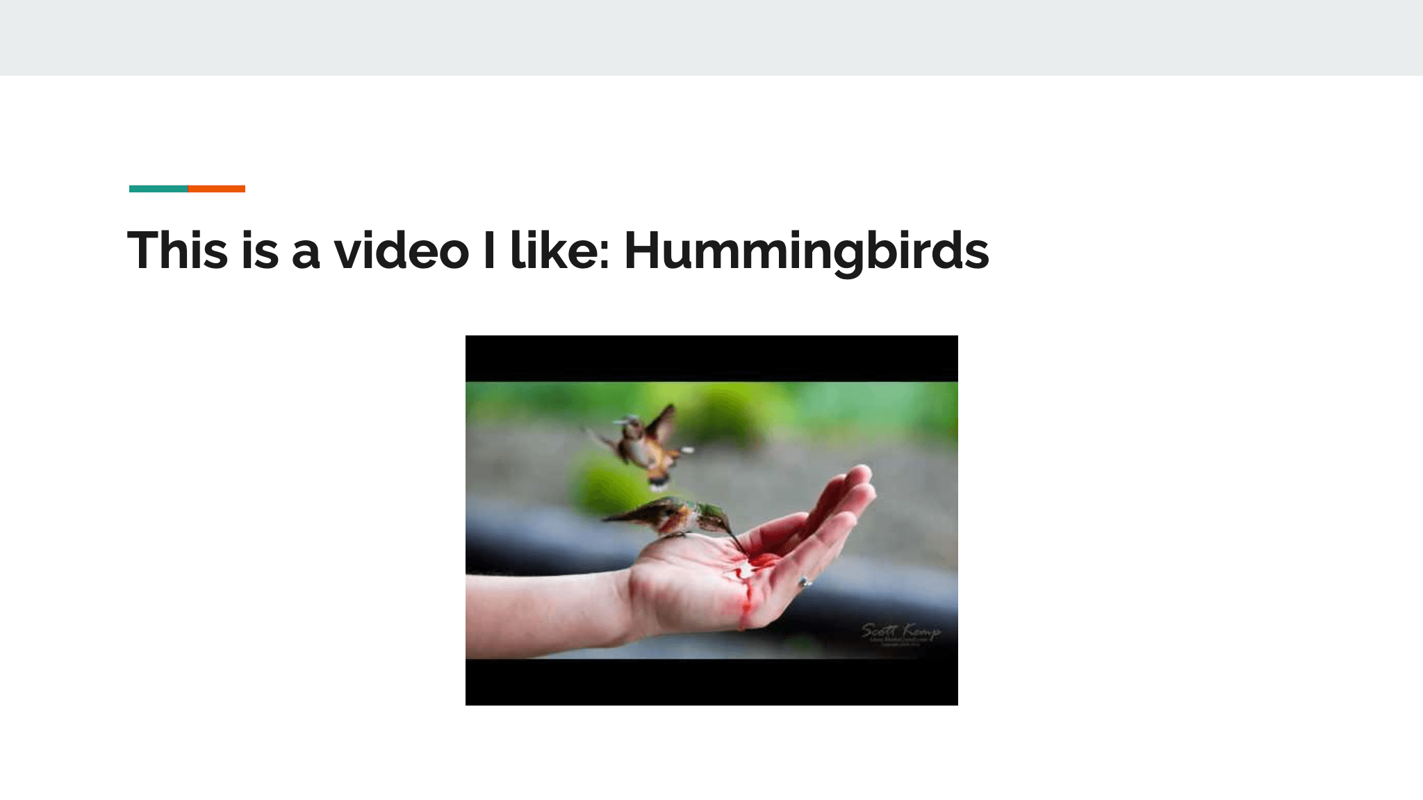 This is a video I like: Hummingbirds