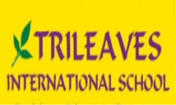 Trileaves International School