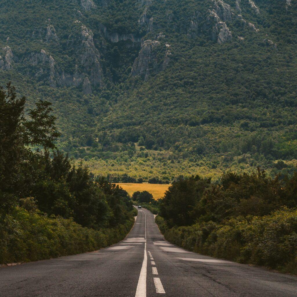 Imagen de una carretera rodeada de árboles.