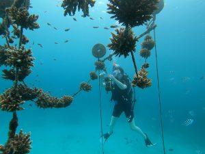 塞席爾珊瑚白化 東非島國告急(圖/Marine Conservation Society Seychelles (MCSS))