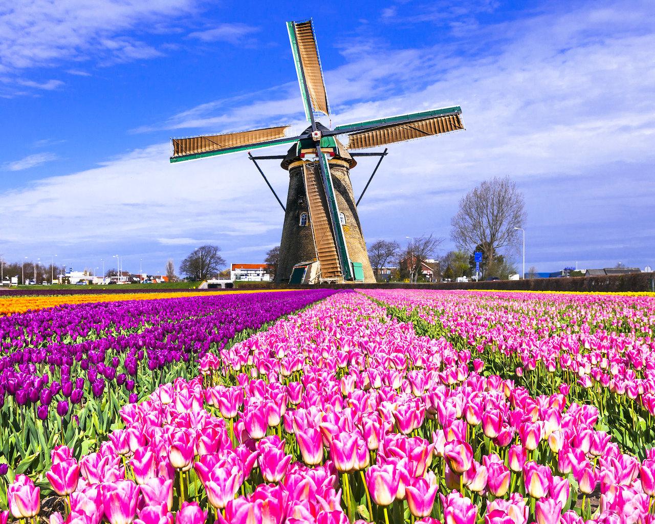 荷蘭正名:叫我尼德蘭(圖/Ajith Kumar/CC BY 2.0)