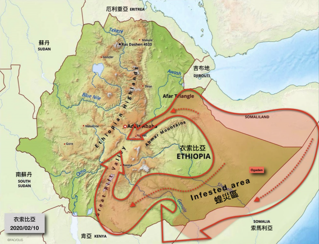 衣索比亞蝗災圖(圖/聯合國農糧署)