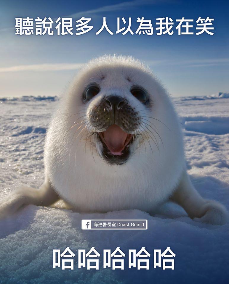 海巡署長室與無所事事小海豹一起籲請大家保護海洋動物