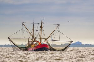 Shrimp fishing cutter vessel on the Wadden sea
