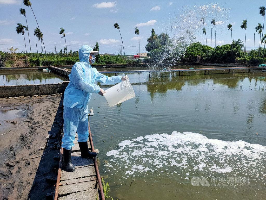 屏東縣已有七處養殖蝦場被檢出感染十足目虹彩病毒