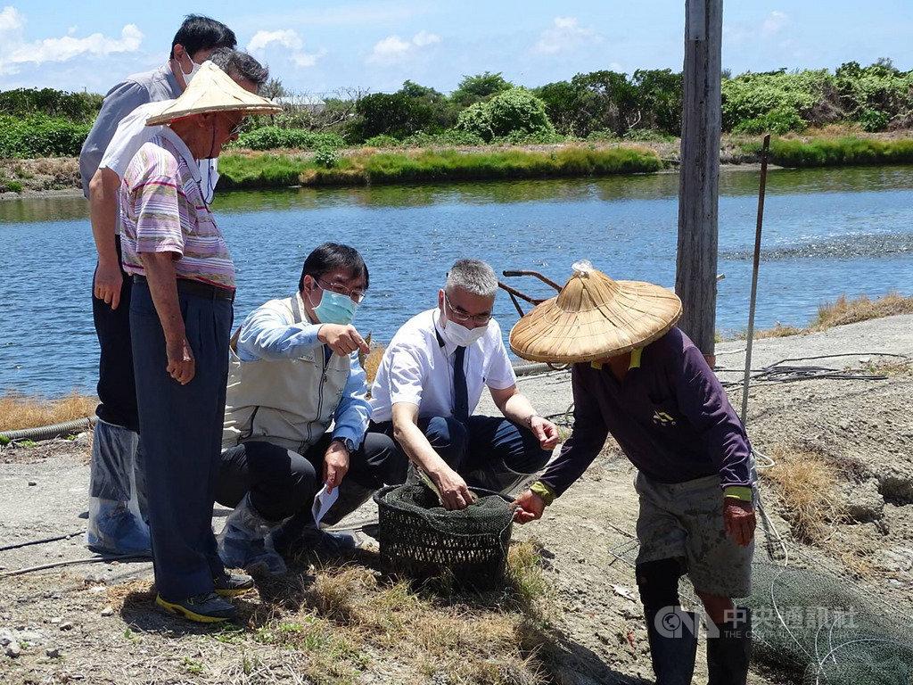台南市長黃偉哲(右3)20日視察台南市南區養蝦場