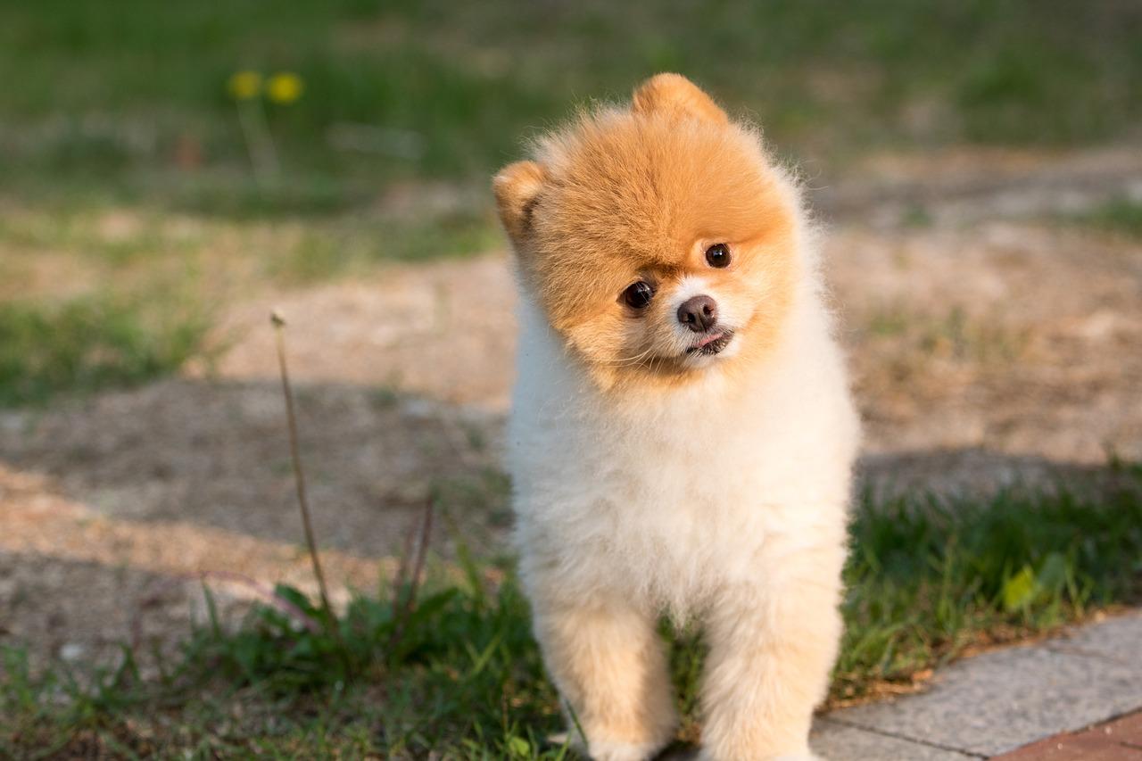 狗(圖/pixabay)