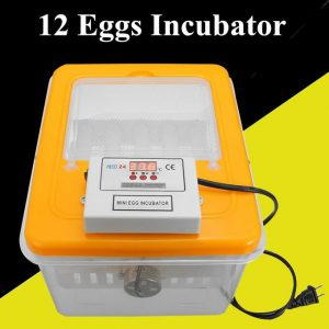 This is an image for this product - Generic 12 Eggs Automatic Turning Incubator Hatcher Digital Temperature Control 220V 30W - Jumia Kenya. This product is available for purchase from Jumia Kenya and is sold by BGvaritystore.