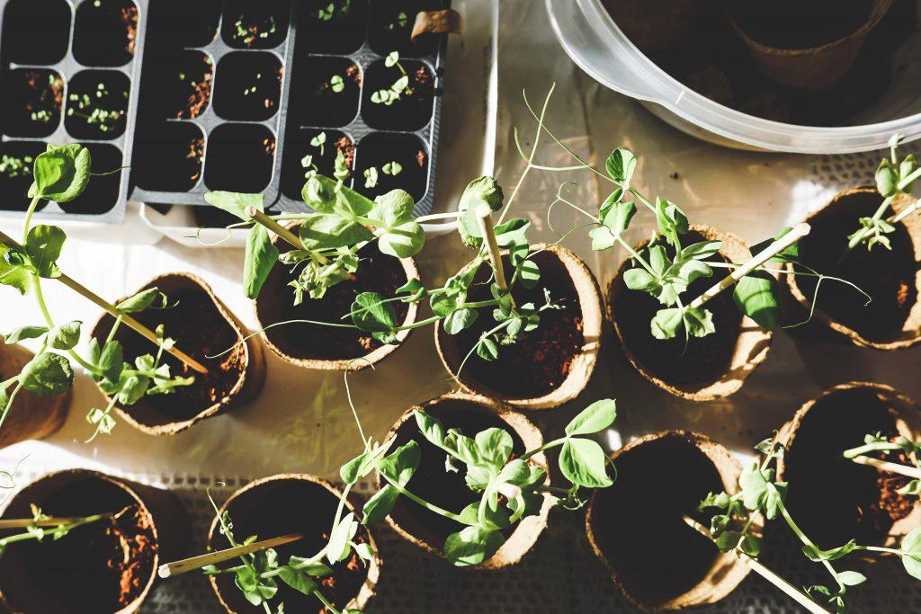 set of plants kept for distribution