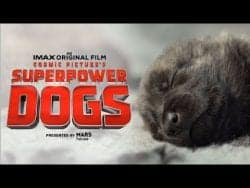 Superpower Dogs Official Trailer