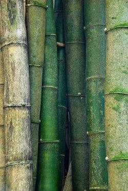 Textures | [Notre couleur] Bambou vert de plusieurs tailles PlusPinn