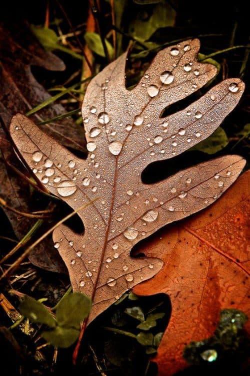 Textures | Autumn Air 500px Primeprime.500px.co