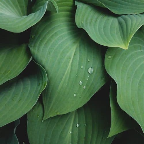 Textures | Abstact Leaves Fine Art Photographyaprilbernpho