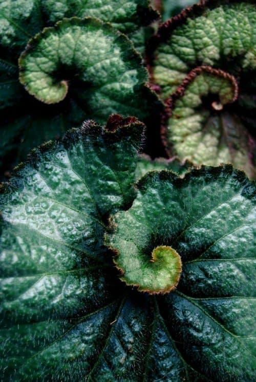 Textures | artistry in nature s green garden The always amazing Rex