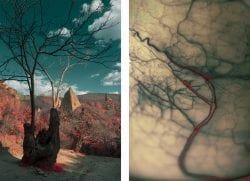 Al Mefer – These are the soul – Macro and Micro shots Juxtaposing Humans, Animals an ...
