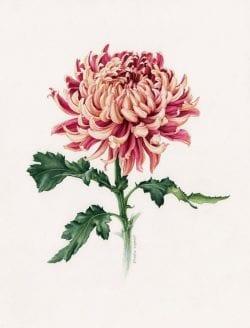 Eunike Nugroho – Floral illustration