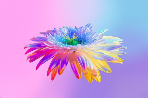 Neon Flowers Photography – Claire Boscher 10
