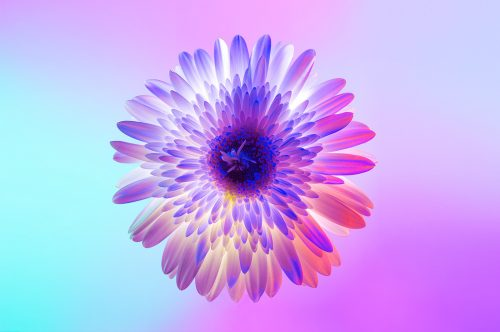 Neon Flowers Photography – Claire Boscher 09