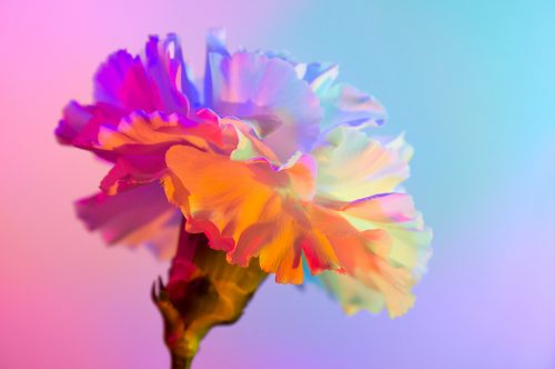 Neon Flowers Photography – Claire Boscher 05