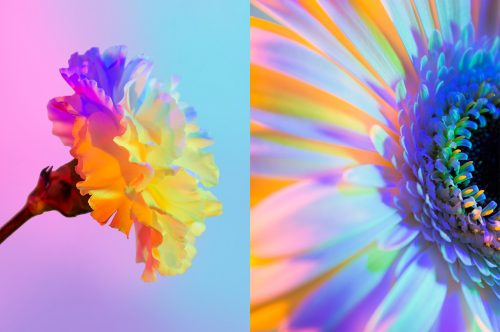 Neon Flowers Photography – Claire Boscher 07