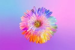 Neon Flowers Photography – Claire Boscher 02