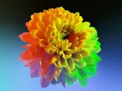 Huawei P30 Pro Usual Macro Photography – Vaporwave aesthetic – Flower 01