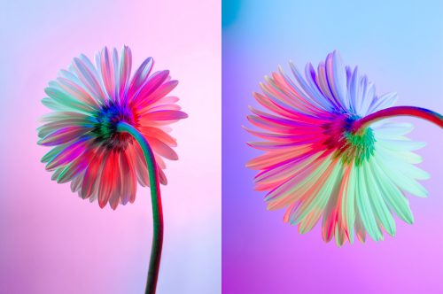 Neon Flowers Photography – Claire Boscher 01