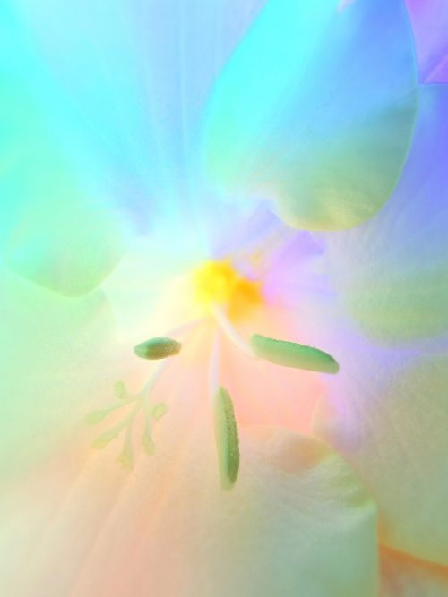 Huawei P30 Pro Usual Macro Photography – Vaporwave aesthetic – Flower 07