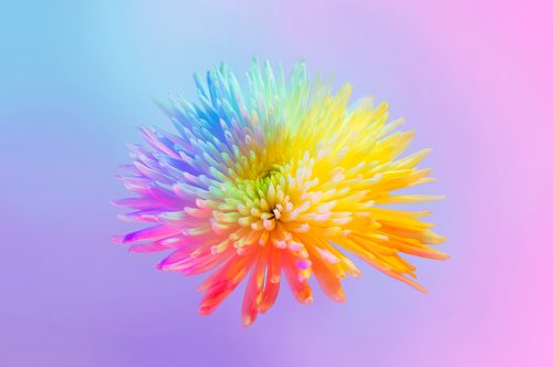 Neon Flowers Photography – Claire Boscher 04