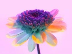 Huawei P30 Pro Usual Macro Photography – Vaporwave aesthetic – Flower 04