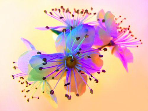 Huawei P30 Pro Usual Macro Photography – Vaporwave aesthetic – Flower 03
