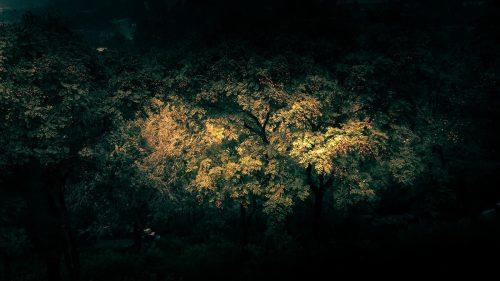 Tom Leighton – Beijing – Photography 011
