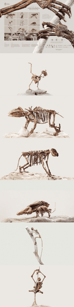 Deforested Bones – Universidad Nacional De Colombia Animal Skeleton Photography