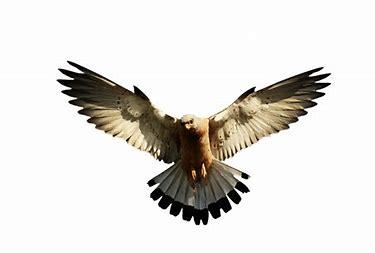 Eagle 67