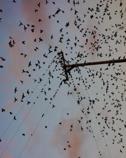 "Photography | Adam Whyte – ""Lucid"" – Birds"