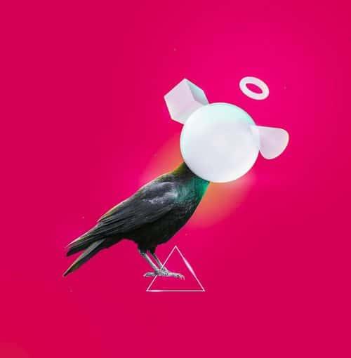 Crow GloW