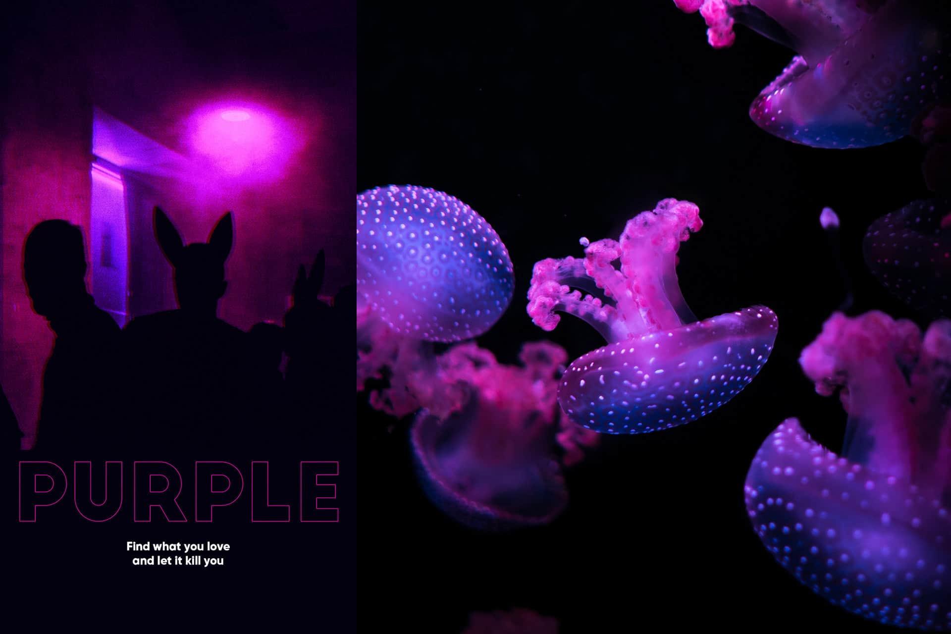 Perfect Purple – Jellyfish Photography
